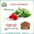 【綠藝家】大包裝C05.櫻桃蘿蔔種子35...
