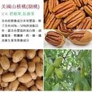 美國胡桃椰棗/養生手工胡桃椰棗/280g