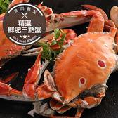 精選鮮肥三點蟹(280g±10%/隻)(食肉鮮生)
