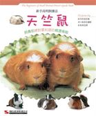新手高明飼養法:天竺鼠