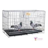 鳥籠 鴿子籠子家用配對籠清倉鳥籠養殖籠大型繁殖對籠巢箱小型便攜鴿籠T