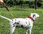 派騰特伸縮脖圈頸圈寵物狗狗項圈中型大型犬牽引繩防爆沖拉布拉多  范思蓮恩