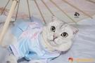 古風清新粉色藍色漢服襦裙寵物貓咪衣裙狗狗衣服中國風【小獅子】