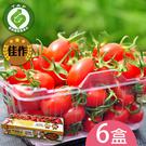 產銷履歷-百分百甘ㄚ蜜-玉女小蕃茄6台斤...