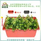 【綠藝家】我家菜園種植專用盆大型(PP耐衝擊塑膠加強型)(磚紅色、棕色)