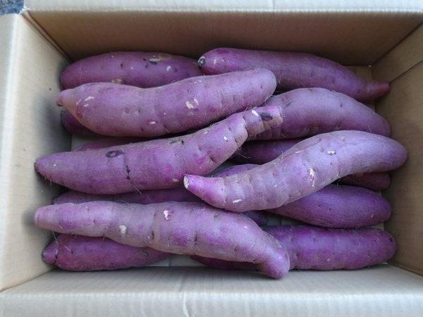 【果之蔬-全省免運】【生】日本頂級名產JA里浦紅皮地瓜 五公斤【原裝日本箱】