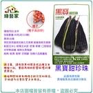 【綠藝家】大包裝G26.黑寶甜珍珠糯玉米種子90克(約350顆)