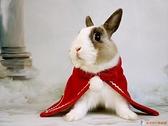 兔子衣服寵物新年衣斗篷紅色圣誕披風迷你裙狗狗貓咪衣過年【公主日記】