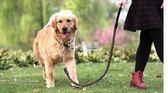 狗項圈 中型大型犬狗狗牽引繩帶金毛拉布拉多牛皮項圈遛狗繩子狗鍊子用品 卡菲婭