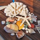 一佳寵物館 魚缸造景天然貝殼海螺珊瑚海星組合套裝裝飾婚慶卷貝魚寄居蟹用殼