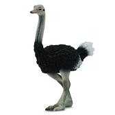 【永曄】collectA 柯雷塔A-英國高擬真動物模型-飛禽動物系列-鴕鳥