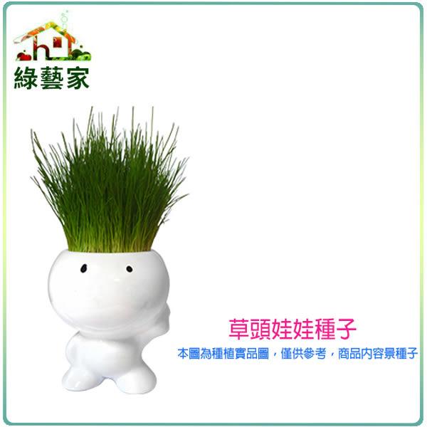 【綠藝家】大包裝M10達冠草(草頭娃娃)種子300克