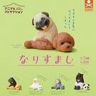 全套5款【日本正版】動物檔案系列 人氣裝...