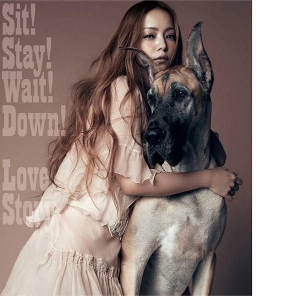 安室奈美惠 Sit! Stay! Wait! Down! Love Story CD 免運 (購潮8)