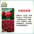 【綠藝家】I06.木膝草草莓種子(英國進口)8顆