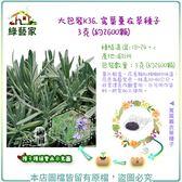 【綠藝家】大包裝K36.寬葉薰衣草種子3克(約2600顆)