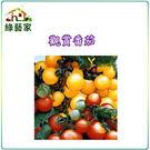 【綠藝家】P05.觀賞蕃茄種子(迷你貝)...