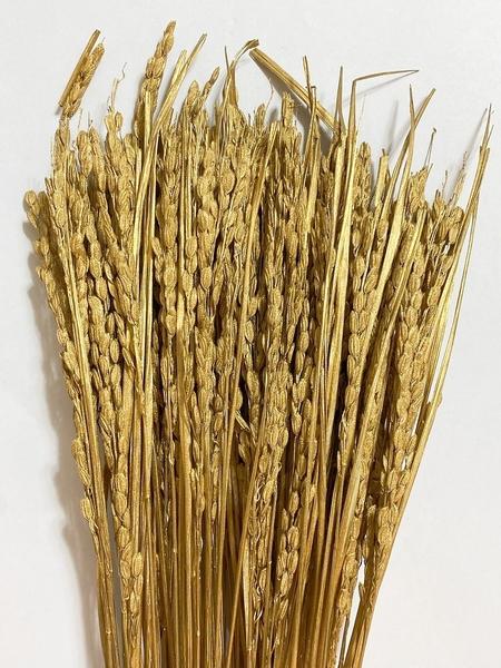本大地農園,稻米,一份3支如圖三