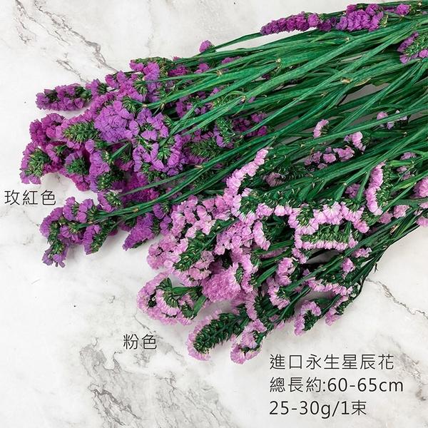 進口永生星辰花-乾燥花圈 乾燥花束 拍照道具 手作素材 室內擺飾 乾燥花材 鄉村風-52元/束
