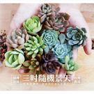 加購多肉植物1株(景天科) + 專用土小包(150g) 【Z0000】