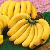 南投香蕉25台斤/箱(免運)