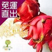樂園.樹. 預購-無農藥紅肉紅皮火龍果(6台斤/箱)【免運直出】