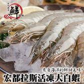 【海肉管家】宏都拉斯活凍白蝦X1盒(1kg±10%含盒重/盒 每盒約48-56隻)