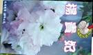 [楊貴妃櫻花] 櫻花苗 小櫻花樹苗 4寸黑軟盆 室外多年生觀賞花卉盆栽 換大盆或種地上快開花