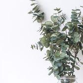 北歐國度模擬單桿尤加利葉長桿綠植裝飾花藝澳大利亞國樹 港仔會社