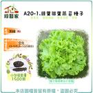 【綠藝家】A20-1.綠葉皺葉萵苣種子1...