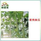 【綠藝家】G28.菱角絲瓜(綠菱,澎湖絲...
