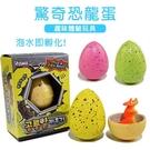 泡水孵化驚奇恐龍蛋 不挑款 兒童玩具 韓國彩色恐龍蛋 泡水膨脹