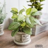 仿真植物盆景綠植塑料盆栽植物裝飾假小綠植盆栽假波斯葉仿真綠蘿 街頭布衣