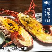 【阿家海鮮】頂級生凍龍蝦250g~300g/尾