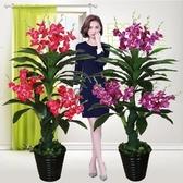 假樹蘭花蝴蝶蘭樹仿真植物落地盆栽大型客廳盆景塑料花裝飾花綠植【快速出貨】