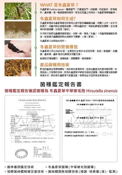 草本之家-冬蟲夏草菌絲體中華被毛孢(100粒)