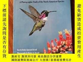 二手書博民逛書店HUMMINGBIRDS罕見THEIR LIFE AND BEHAVIOR (大16開精裝英文原版 蜂鳥他們的生活