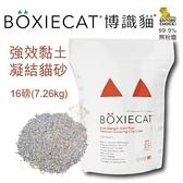 *KING WANG*【3包免運組】美國頂級 BOXIECAT《博識貓/益生菌強效黏土凝結貓砂》16磅(7.26kg)