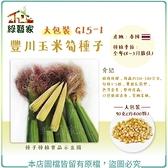 【綠藝家】大包裝G15-1豐川玉米筍種子90克(約400顆)