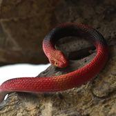 逼真仿真蛇創意塑膠兒童玩笑動物假軟蛇模型小玩具彈性假蛇橡皮蛇【店慶8折促銷】
