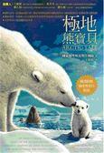 (二手書)極地熊寶貝