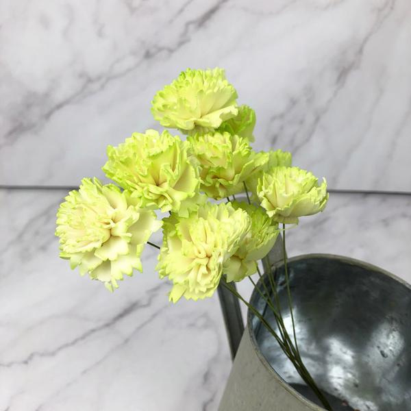 日本進口大地農園 32764 不凋花材漸層帶枝康乃馨-乾燥花圈 乾燥花束 花禮擴香 母親節花束