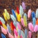 彩色兔尾草,混色20支、不裁剪,可插花瓶,長度約20公分,顏色隨機