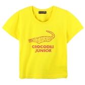 『小鱷魚童裝』純棉T恤(02號~14號)585406