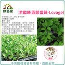 【綠藝家】K15.洋當歸(圓葉當歸)種子80顆