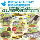 【轉蛋TAKARA TOMY 轉頭多美動物園P3】Norns 日本扭蛋公仔玩具貓咪倉鼠 食蟻獸 穿山甲 海豹 可愛