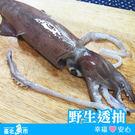 【台北魚市】溪和 野生透抽 350g±10%