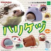全套6款【日本進口】刺蝟 屁屁造型 擺飾 扭蛋 轉蛋 EPOCH - 607553