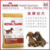 *WANG*法國皇家《臘腸幼犬PRDJ30》1.5kg
