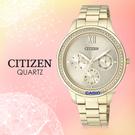 CITIZEN 星辰 手錶專賣店 ED8152-58P 石英錶 女錶 不鏽鋼錶殼IP金 強化玻璃鏡面 防水30米